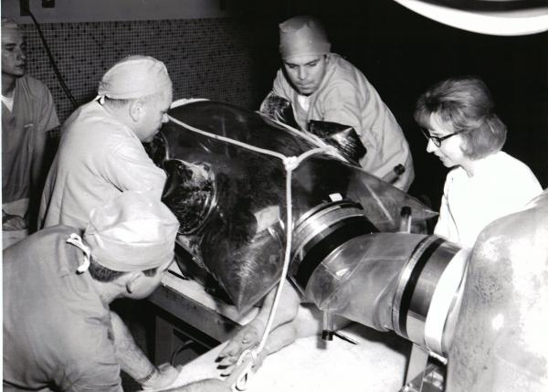 Germ Free Pigs Produced